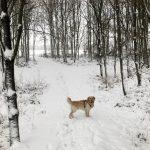 Met de hond spelen in de sneeuw